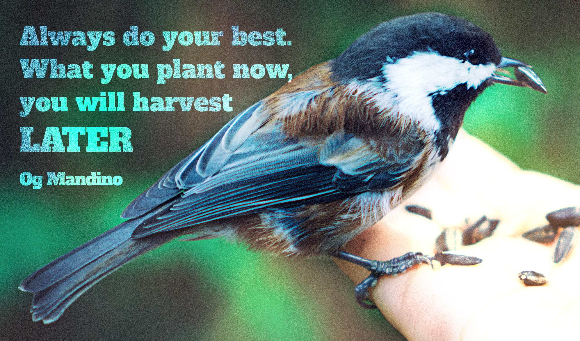 daily inspirational quote image:a black and white bird pecking seeds from an open hand
