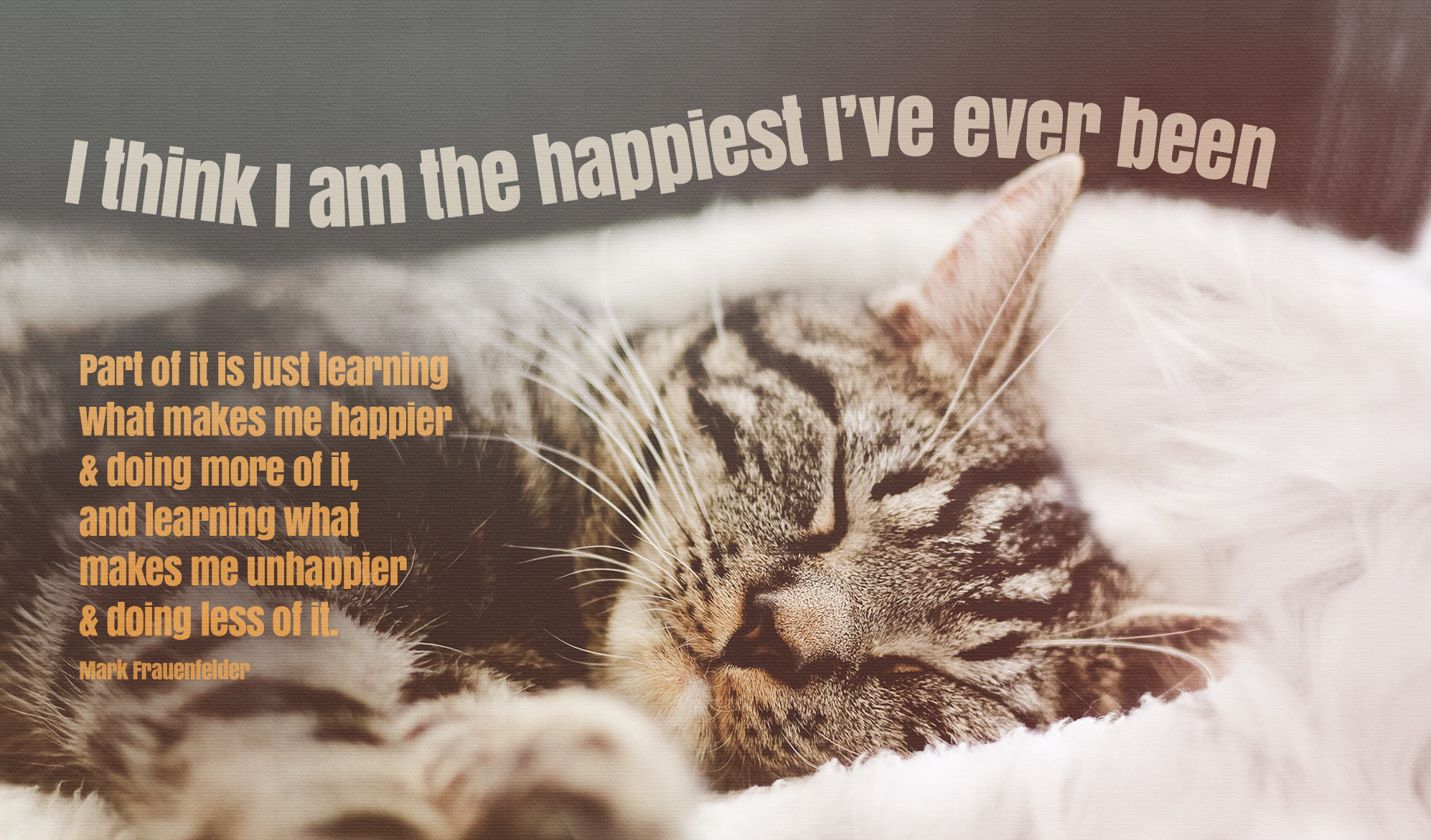daily inspirational quote image:a graey tabby sleeps in comfortable soft blanket
