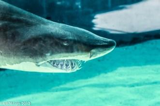 Long Beach Aquarium (5)