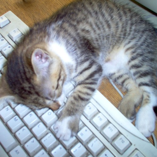 Writer's block: Cat sleeping on a keyboard.