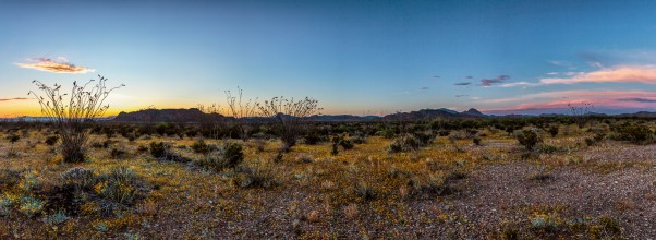 Flowering Desert Floor Panorama