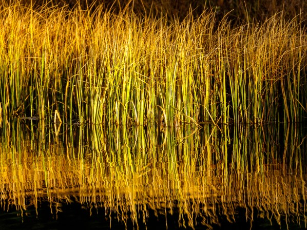 Grassy Reflection
