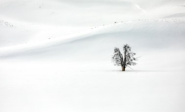 Lone Split Tree