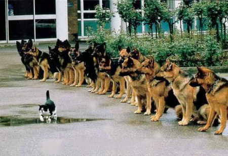 cat_police_dogs