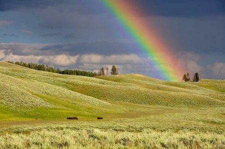 虹がかかっている草原