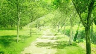160920-光が挿す公園