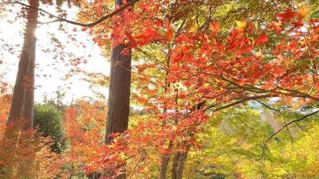 清水寺の紅葉1