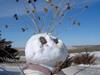 20070304_first_snowman_2