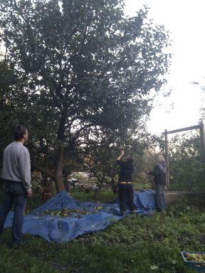 2013-10-26 De 2e plukdag voor appelsap dit jaar