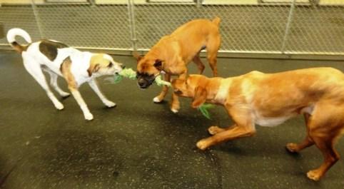 Doggie Daycamp
