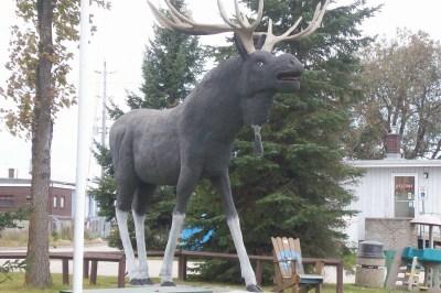 Big Moose in Dryden, Ontario
