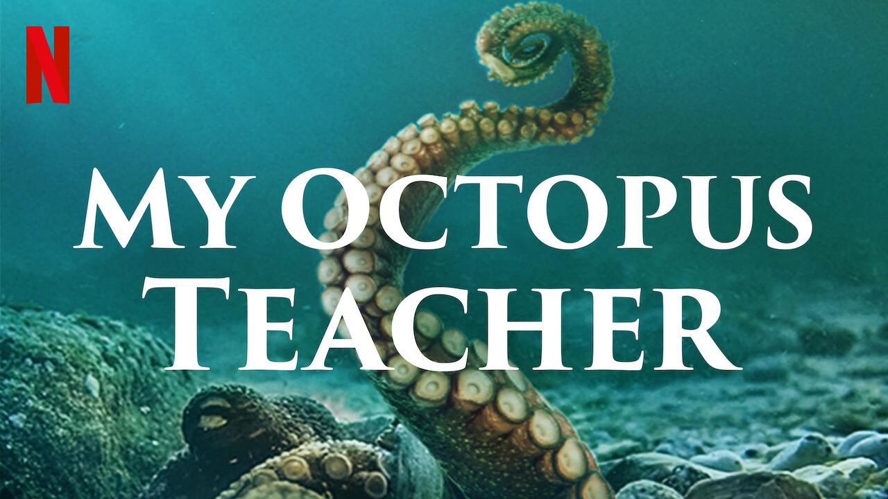 My Octopus Teacher Movie
