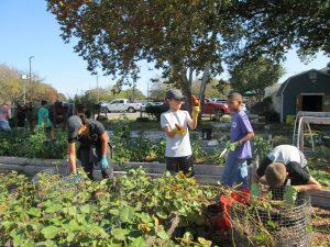 Tarrant County Food Bank Work Day, Montessori Private School, Arlington TX