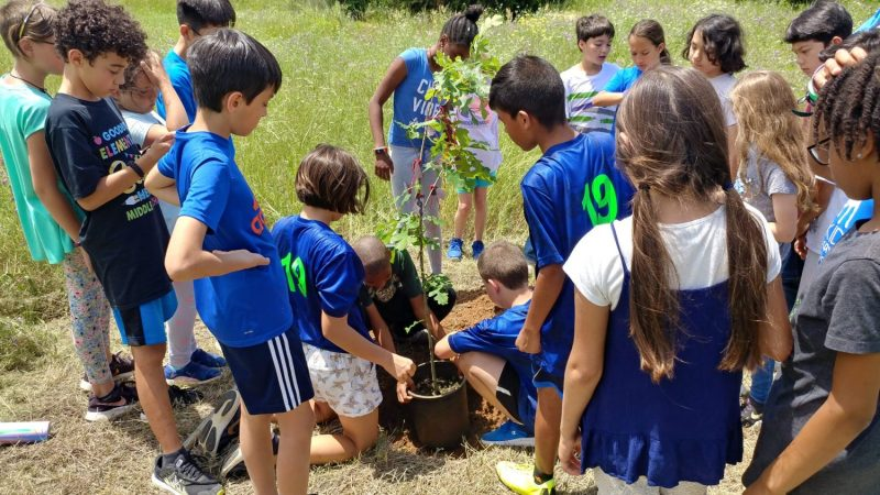 Planting Tree, The Montessori Academy of Arlington, Private School Arlington TX