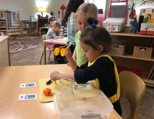 Early Childhood Science