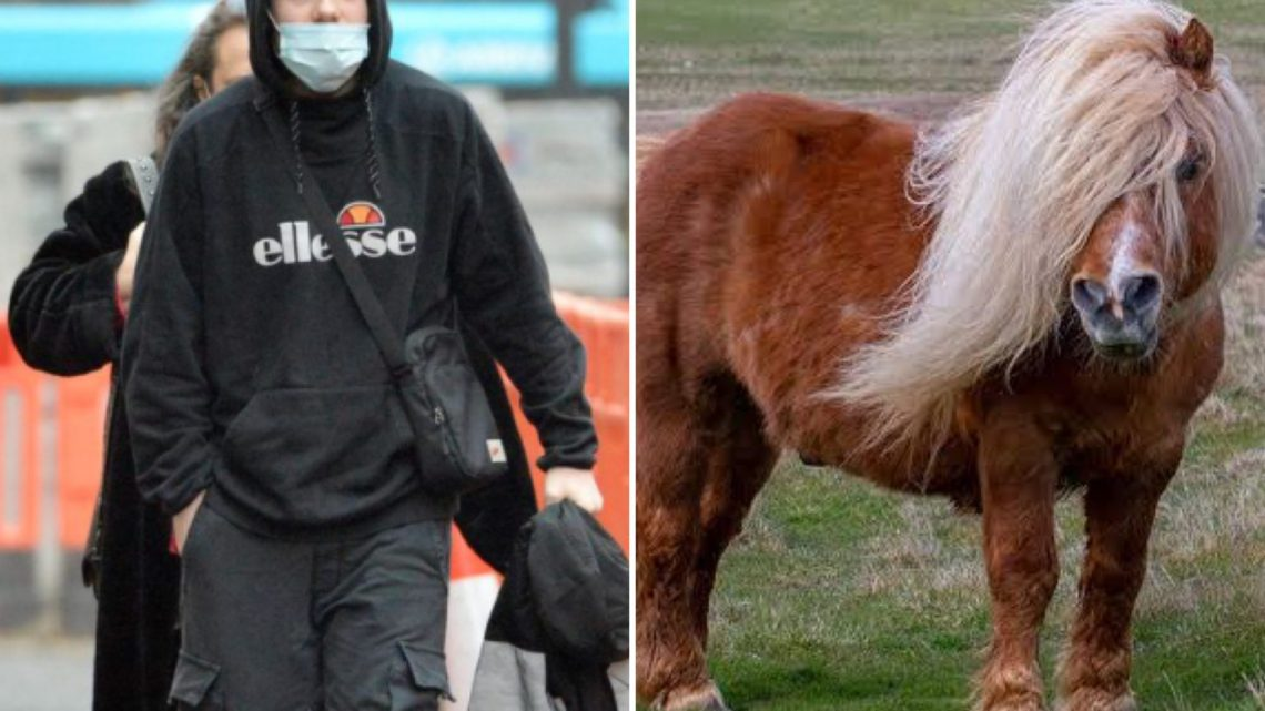 23-Year-Old Man Sentenced For 'Raping' Pony Four Years After Being Prosecuted For Having Sex With Horse