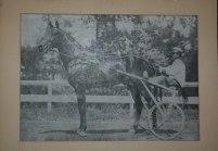 1900s Dan Patch Horse