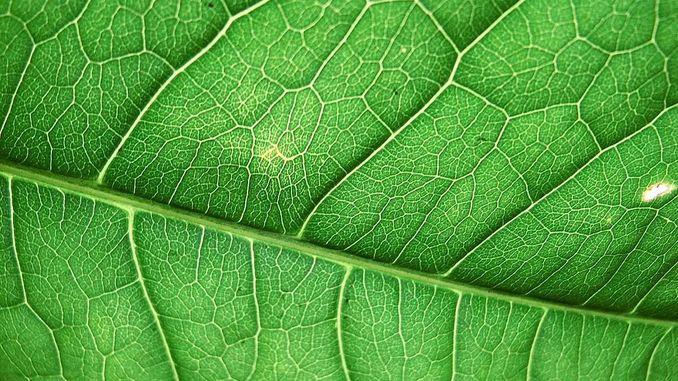 У штучної клітці зібраний фотосинтетичний апарат
