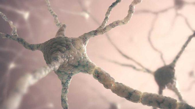 Виявлено ген, відповідальний за старіння мозку