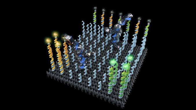 Створено ДНК-нанороботи які можуть транспортувати і сортувати молекули