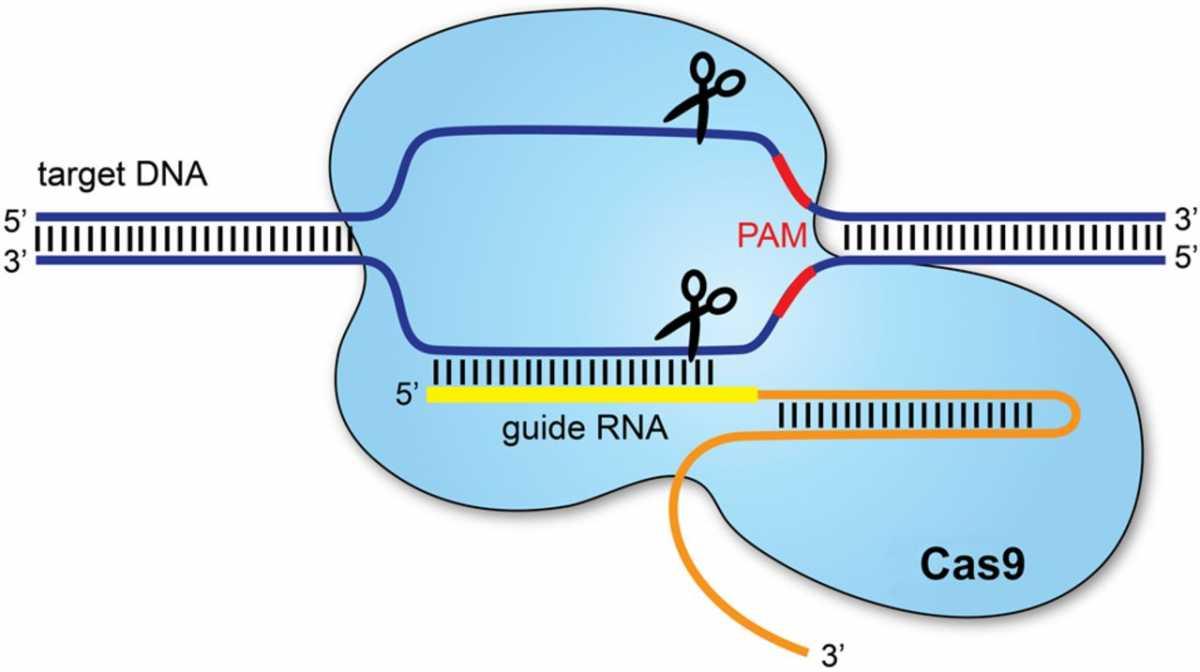 Новий метод дозволяє відстежувати окремі клітини пухлини