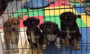 Powerball Puppies!