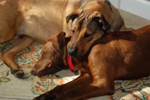 Cooper and Jasper