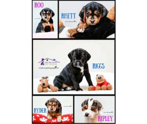Emilia's Puppies