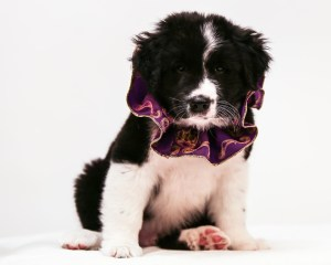 Tanner as a Puppy