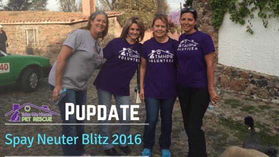Spay Neuter Blitz 2016