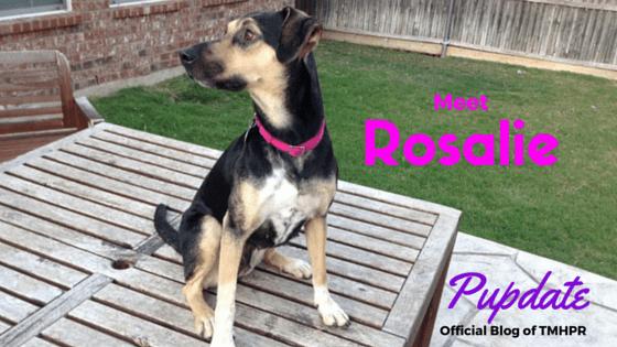 Rosalie Blog