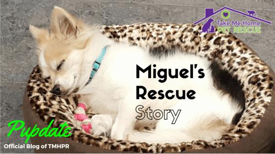 Miguel Blog