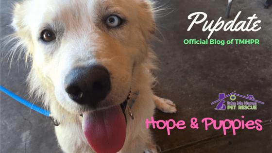 Hope Blog