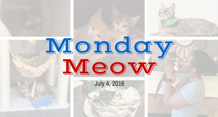 July-4-Monday-Meow