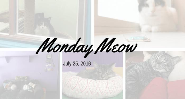 Monday_Meow_July25