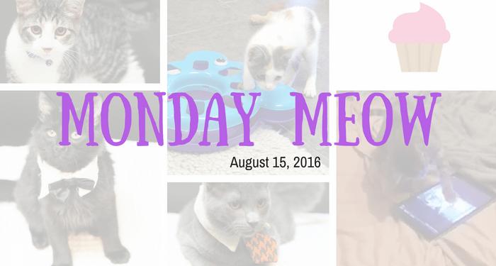 8-15-16-Monday-Meow-Header