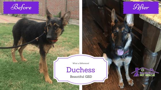 Duchess Featured Pup