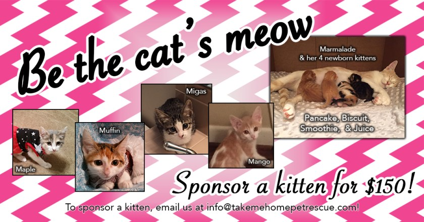 Kitten-Sponsorship_Website