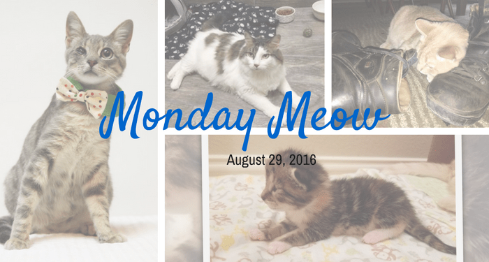 Monday-Meow-08-29-16