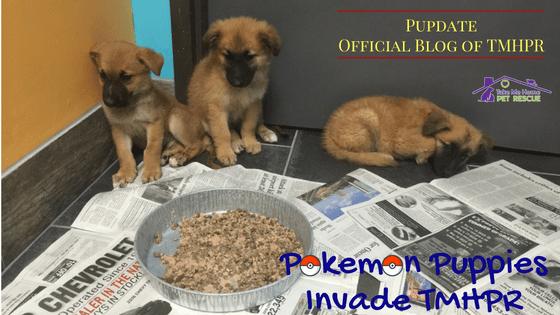 Pokemon Blog