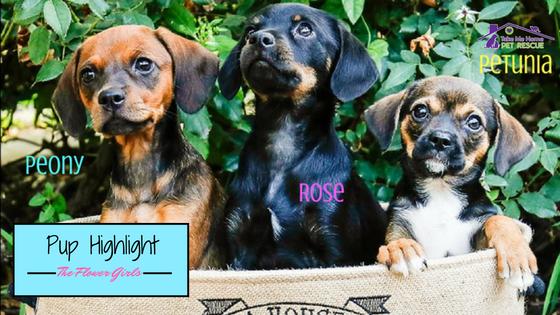 Pup Highlight Flower Girls