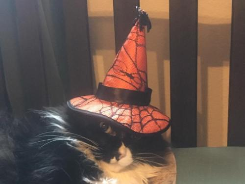 Colin acts like Halloween hat is squishing his head, silly boy!