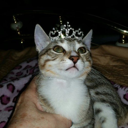 Libby dressed up as a Princess (but really, she thinks she's a princess every day of the year).