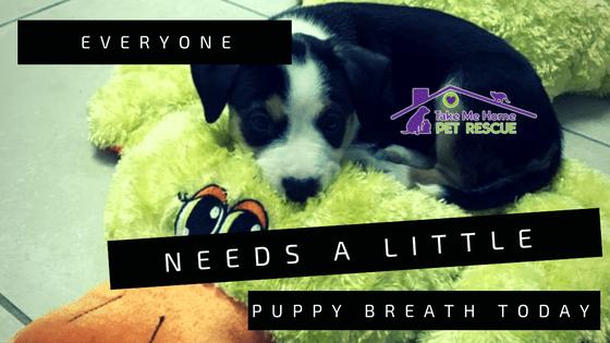 Puppy Breath