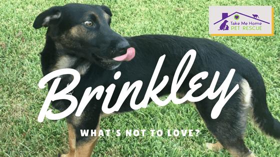 Brinkley (2)