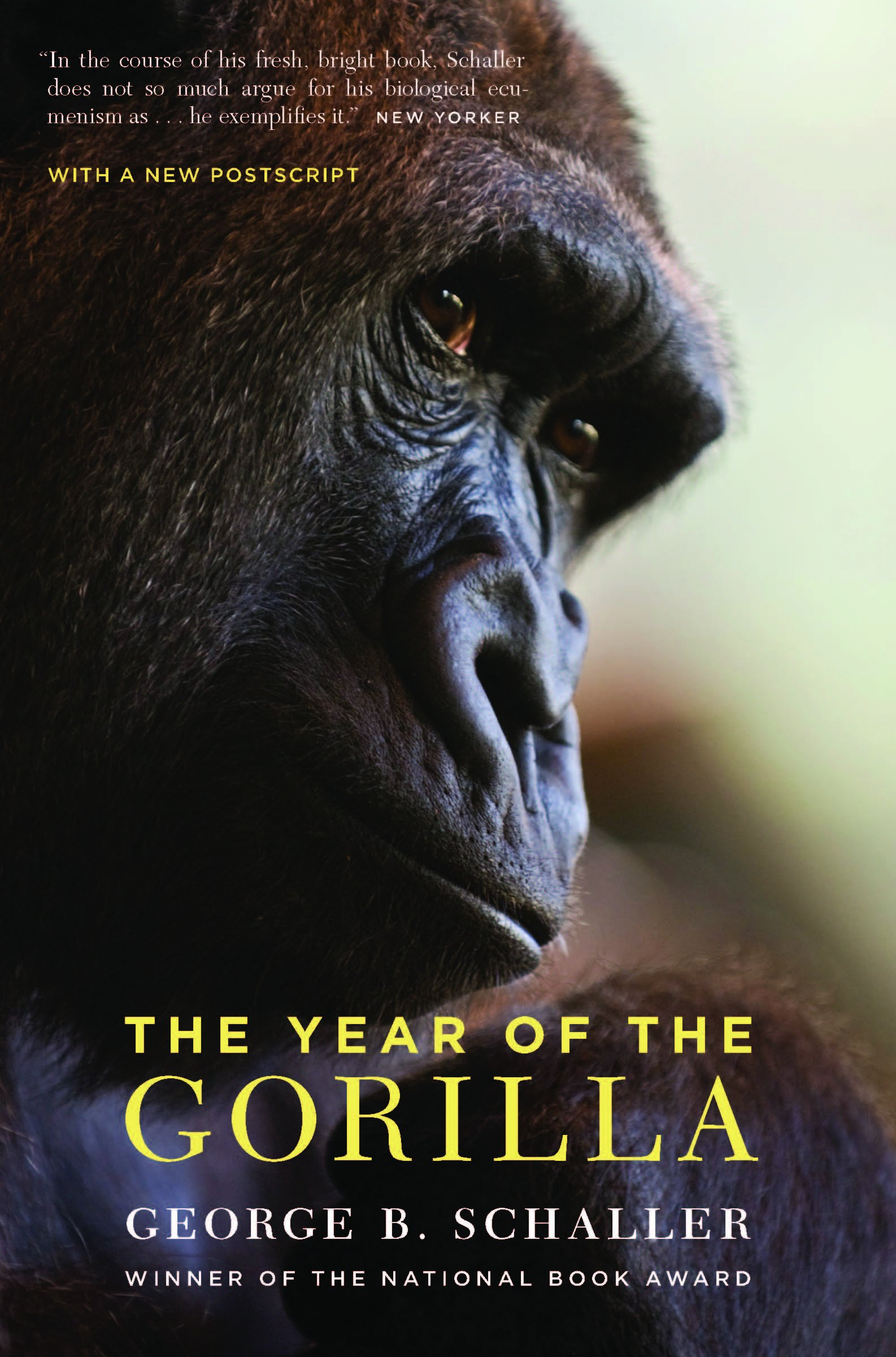 Afbeeldingsresultaat voor the year of the gorilla