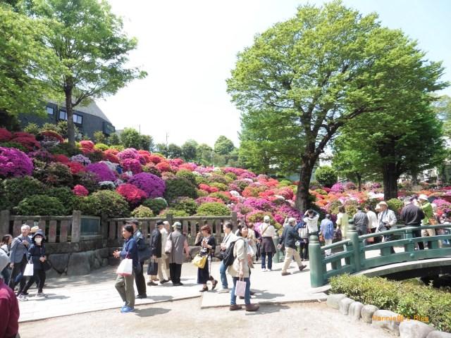 Tokyo Yanesen Nezujinjia-20180419-Azalea-1