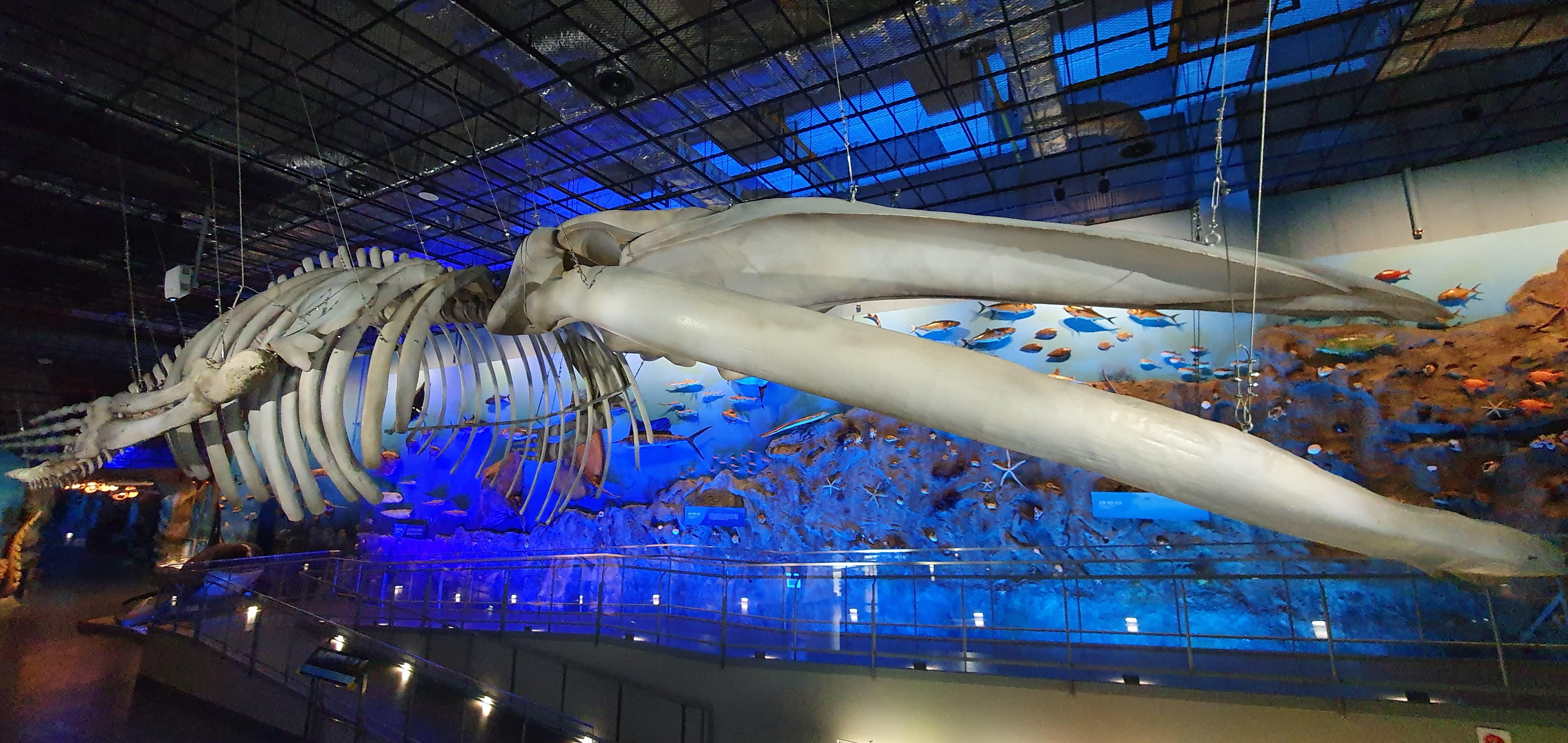 대왕고래뼈