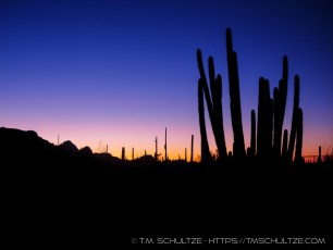 Organ Pipe Sunrise