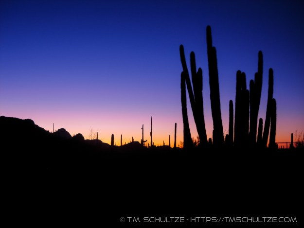 Organ Pipe Sunrise by T.M. Schultze